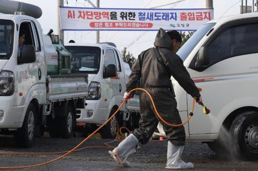 Hàn Quốc phòng ngừa dịch cúm gia cầm