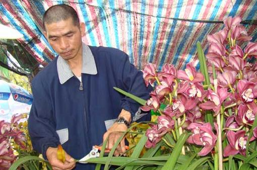 ĐBSCL cung ứng khoảng 9 triệu chậu hoa kiểng phục vụ Tết 2018