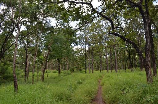 Tây Nguyên để mất trên 400.000ha rừng