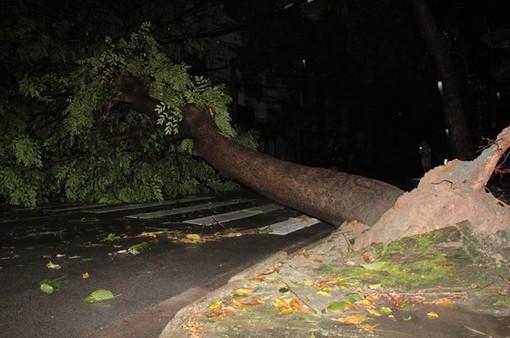 Mưa lớn, cây xanh ngã đổ hàng loạt trên đường TP.HCM