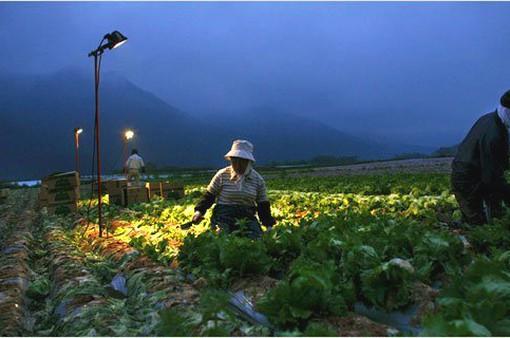 Mô hình bảo vệ quyền lợi lao động thời vụ tại Hàn Quốc, Nhật Bản