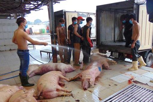 Kỷ luật hàng loạt cán bộ thú y trong vụ lợn bị tiêm thuốc an thần tại TP.HCM