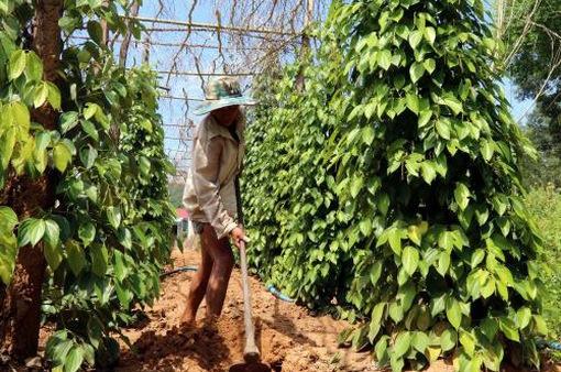 Đồng Nai: Mưa trái mùa gây thiệt hại 1.400 tỷ đồng
