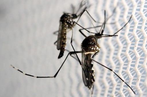 122 người tử vong do sốt xuất huyết tại Malaysia