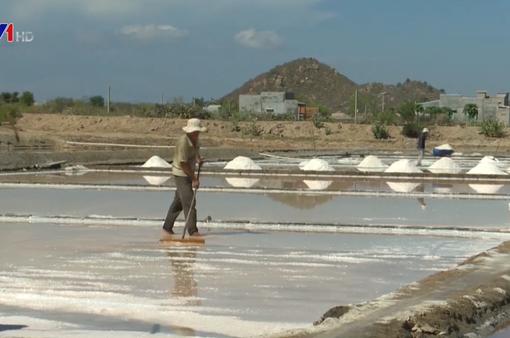 Ninh Thuận: Muối được giá nhưng mất mùa