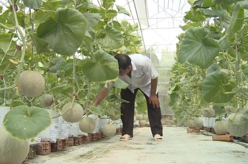 Nông dân Bến Tre làm giàu từ nông nghiệp công nghệ cao