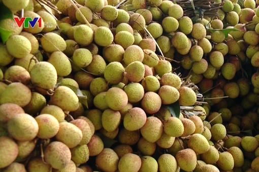 Hạn chế phụ thuộc vào thị trường Trung Quốc, nông sản Việt nỗ lực tìm thị trường mới
