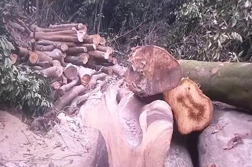 Thủ đoạn của các đối tượng phá rừng, chiếm đất ở Tĩnh Gia, Thanh Hóa