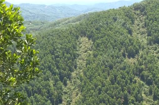 Quảng Trị tăng cường phòng chống cháy rừng mùa nắng nóng