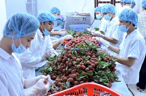 Xuất khẩu rau quả tháng 5 khởi sắc tăng 38% về giá trị