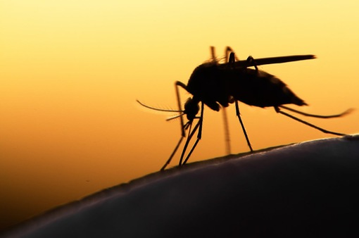 Siêu khuẩn sốt rét lan sang nhiều quốc gia ở Đông Nam Á