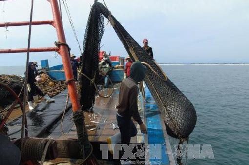 Tăng cường kiểm soát hoạt động của tàu cá khai thác hải sản