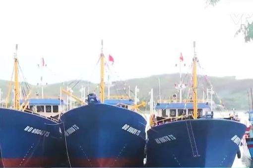 Nhiều tàu vỏ thép ở Quảng Nam hoạt động hiệu quả
