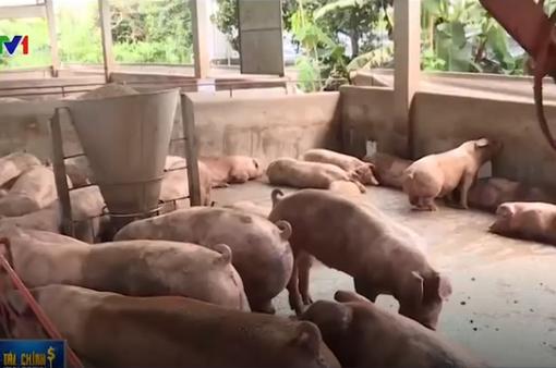 Giá thịt lợn tại Đồng Nai lại giảm sâu