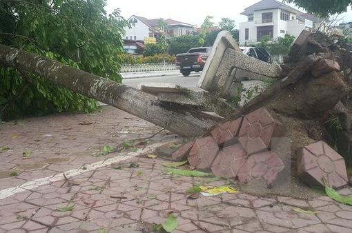 Thiệt hại do dông lốc ở Lào Cai ước tính trên 7 tỷ đồng