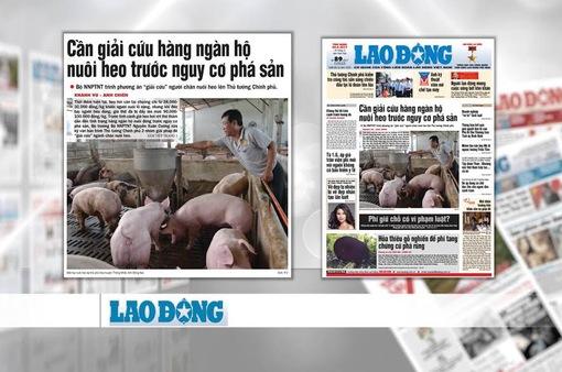 """Ngành chăn nuôi lợn """"thoi thóp"""": Nguyên nhân và giải pháp"""