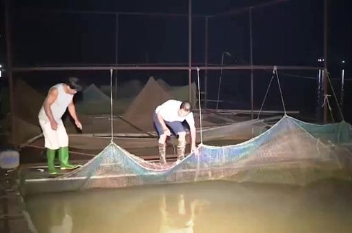 Thâu đêm bảo vệ lồng bè trước giờ xả lũ hồ Hòa Bình