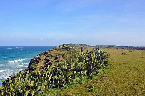 Độc đáo bãi biển xương rồng ở Phú Yên