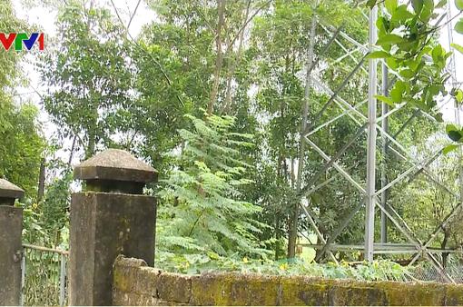 Nguy cơ mất an toàn do trồng cây dưới đường điện cao áp