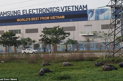 """Samsung Việt Nam lên tiếng về thông tin """"chuyển sản xuất sang Triều Tiên"""""""