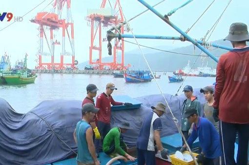 Bình Định triển khai các biện pháp chống khai thác thủy sản bất hợp pháp