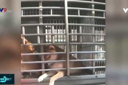 Trung Quốc: Xe bus đưa… chó đến trường