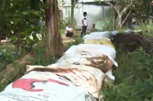 Vĩnh Long: Đắp đê bảo vệ vườn cây trước kỳ triều cường