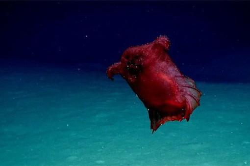"""Phát hiện """"quái vật gà không đầu"""" ở Nam Cực"""