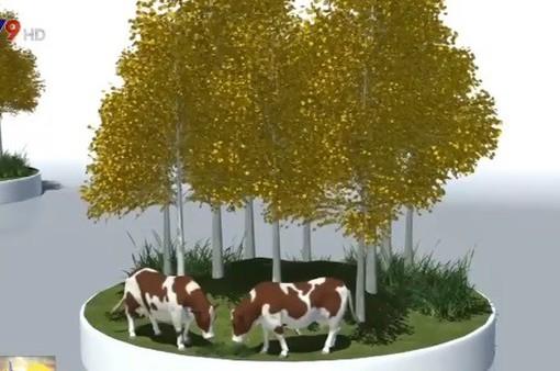 Mỹ: Rừng thông Pando bị đe dọa bởi con người