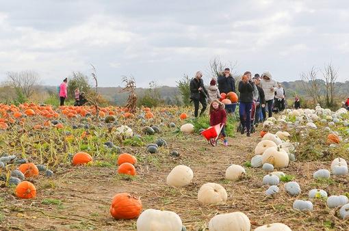 Nông trại bí ngô tự chọn mùa Halloween