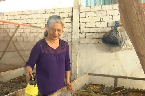 Cô giáo về hưu mỗi tháng cung cấp hàng trăm kg dế ra thị trường