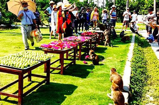 Độc lạ tiệc buffet dành cho hơn 1.000 chú khỉ
