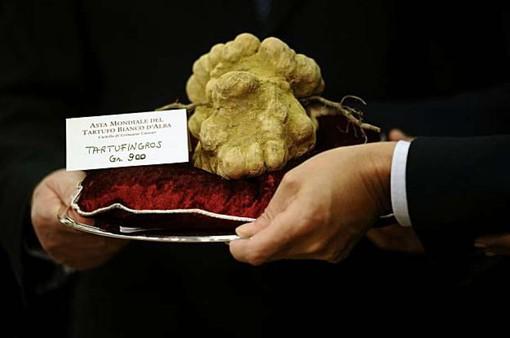 Nấm truffle trắng Alba quý hiếm đạt giá 85.000 Euro