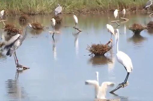 Khó kiểm soát việc đánh bẫy động vật tự nhiên