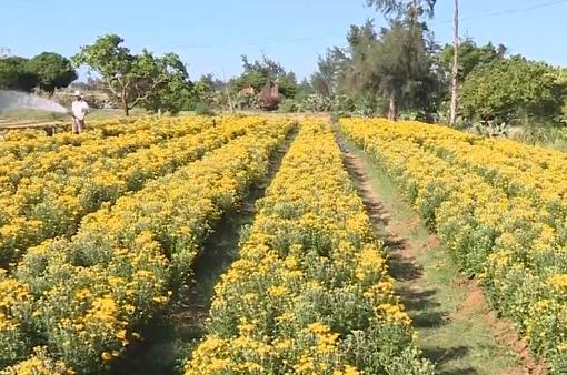 Hơn 15 triệu chậu hoa cảnh phục vụ Tết 2019