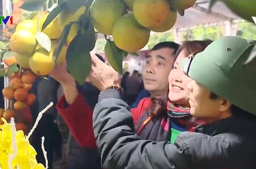 Khai mạc lễ hội cây ăn quả có múi tỉnh Hòa Bình