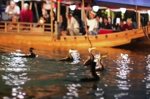 Đánh bắt cá bằng chim cốc tại Nhật Bản