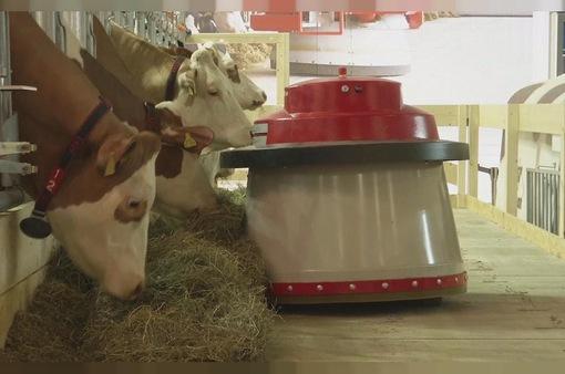 Hiệu quả với robot hỗ trợ chăn nuôi