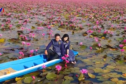 Mê mẩn hồ hoa súng đẹp như tranh ở Thái Lan