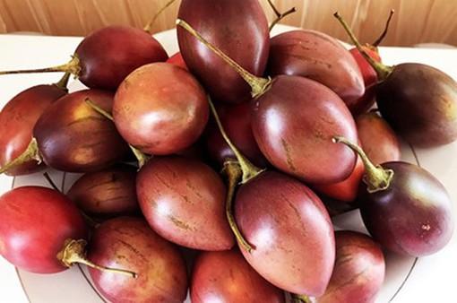 Trái cây Magic S - Sản phẩm nông nghiệp mới tại Lâm Đồng