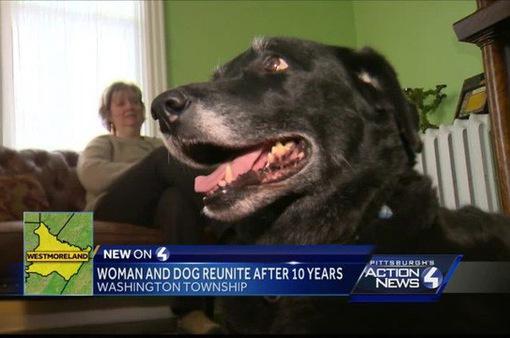 Chú chó 10 năm thất lạc bất ngờ tìm về với chủ