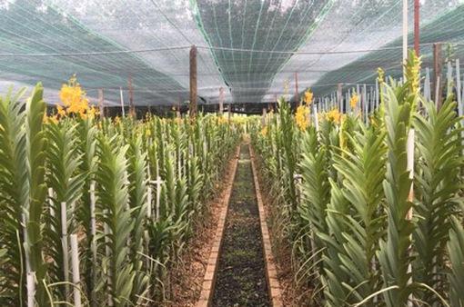 Tây Ninh nỗ lực hướng tới phát triển nông nghiệp công nghệ cao