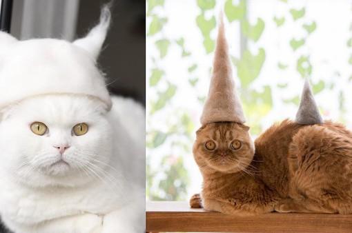 Thời trang mũ ngộ nghĩnh cho mèo tại Nhật Bản