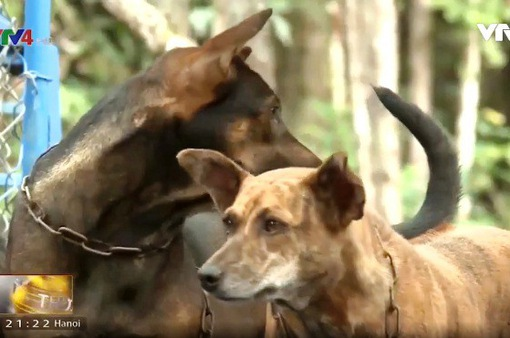 Những chú chó đặc biệt trên đảo Ngọc Phú Quốc