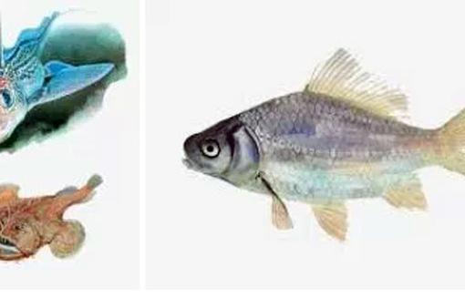 Hơn 70% cá biển vùng nước sâu nhiễm các chất nhựa dẻo