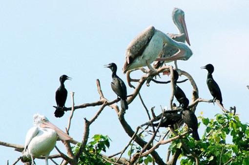Vườn chim Bạc Liêu nâng mức cảnh báo cháy rừng mùa khô
