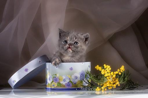 Độc đáo ảnh viện cho vật nuôi tại Ukraine