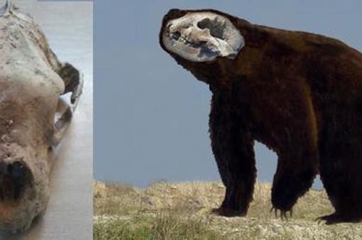Phát hiện hóa thạch gấu có niên đại 120.000 năm