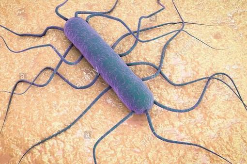 WHO cảnh báo nguy cơ lây lan vi khuẩn Listeria