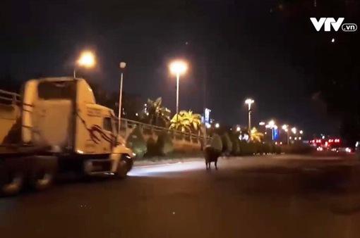 Xe chở bò gặp sự cố trên cầu Phú Mỹ